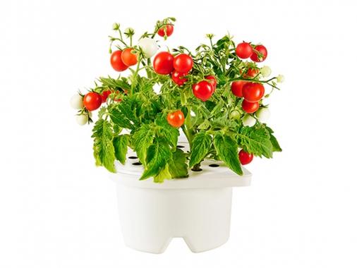 Картридж Click and Grow томаты Черри от Madrobots