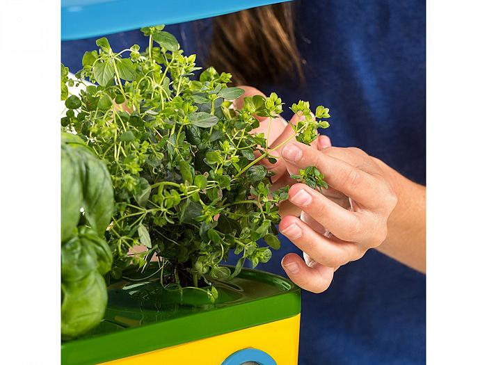 Набор для выращивание зелени 86